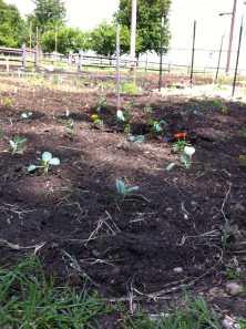 first garden pik